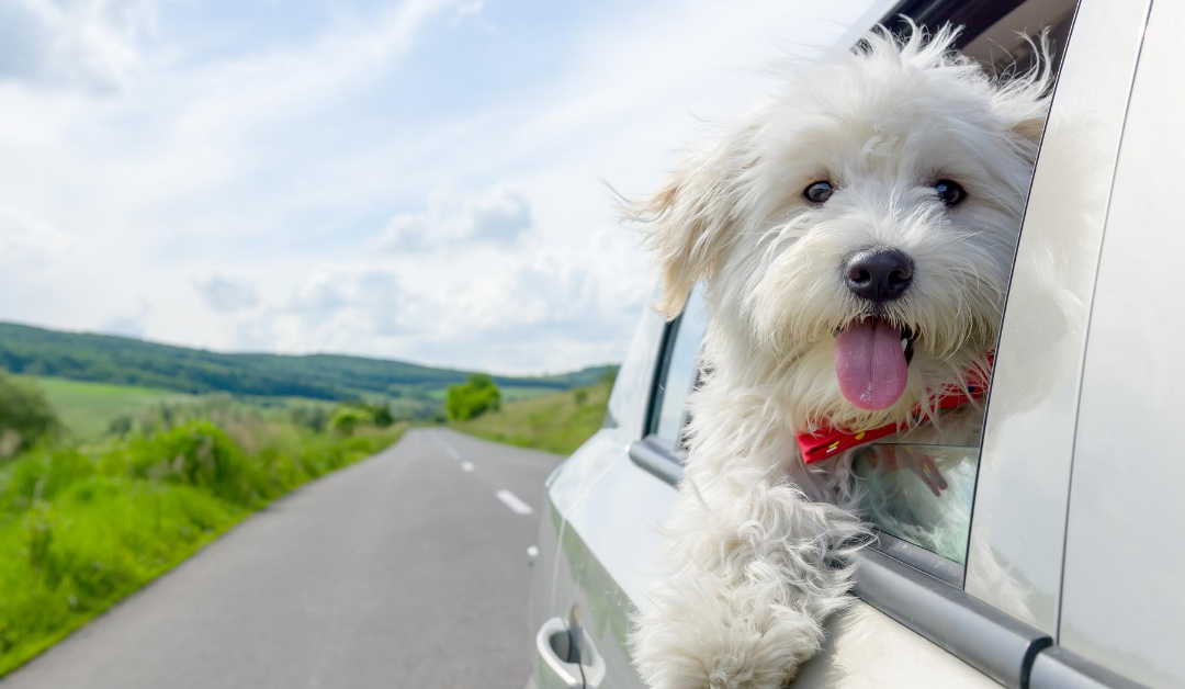 Road Tripping With Your Pet? Read These 5 Tips First