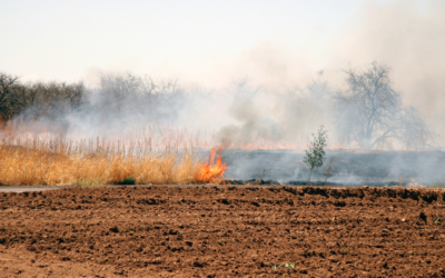 Prevent Brush and Wildfires With These Safe Recreation Tips