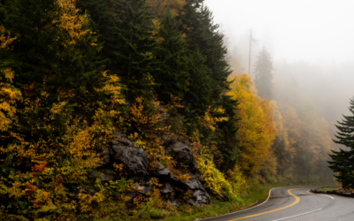 Animal Traffic Rises in Fall- Stay Vigilant on the Road with These 6 Tips